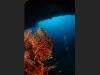 Plongée Maldives Merouville.com - gorgones