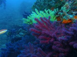 Plongée à Palamos, Espagne