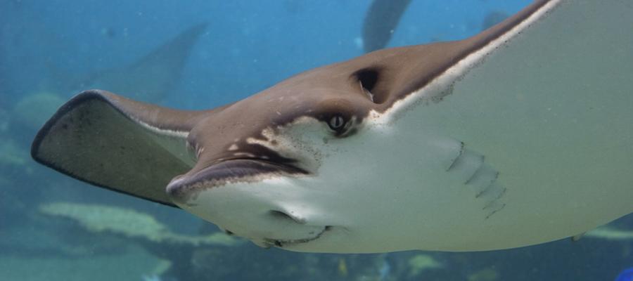 Un joyau de la plongée: les Îles Medes à L'Estartit